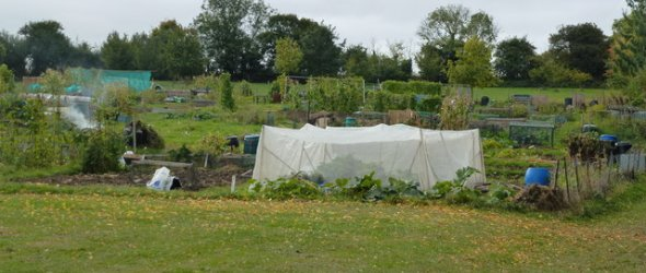 Image: Allotments St Judith's Lane
